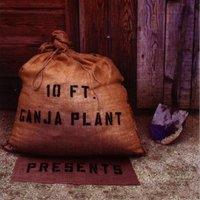 10 Ft. Ganja Plant Mp3